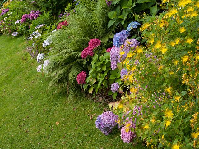 Растения — комнатные растения