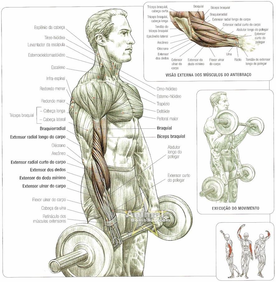 Como Malhar Costas Como Malhar Biceps